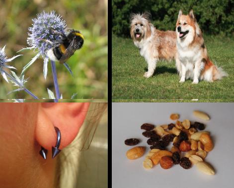 Immunbiologie: Störung des Immunsystems