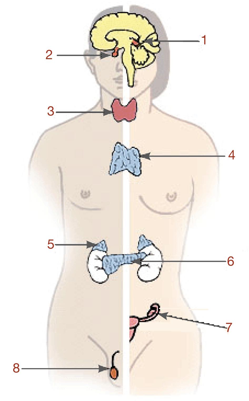 Hormone: Einführung