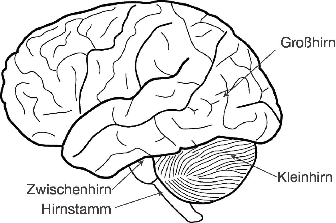 Nett Gehirn Teile Beschriftet Bilder - Menschliche Anatomie Bilder ...