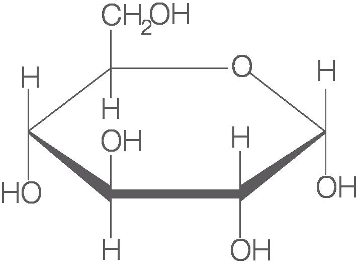 Biochemische Grundlagen: Kohlenhydrate