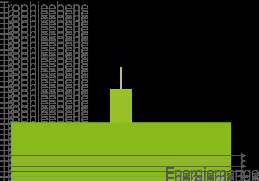 Stoffkreisläufe und Energiefluss: Nahrungskette und Nahrungsnetz