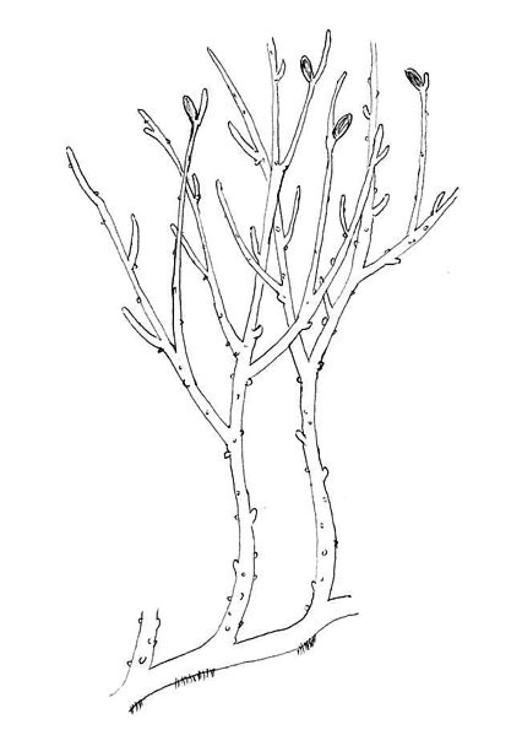 evolution von tieren und pflanzen - evolution