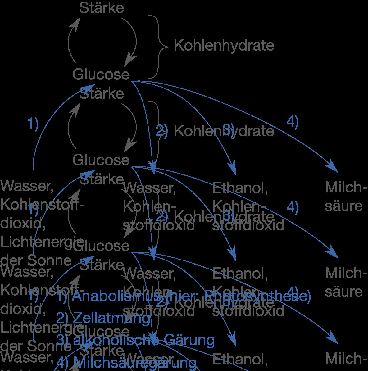 Einführung - Stoffwechsel - Bio - Digitales Schulbuch - Skripte ...