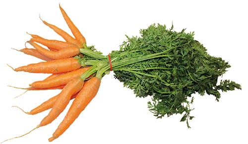 Ernährung: Vitamine und Mineralstoffe