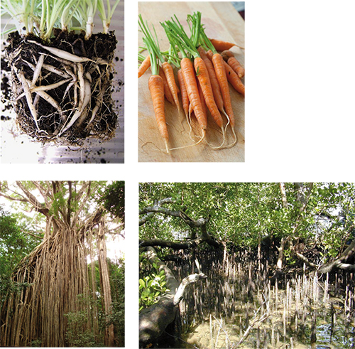 Stoffwechsel: Pflanzenorgane