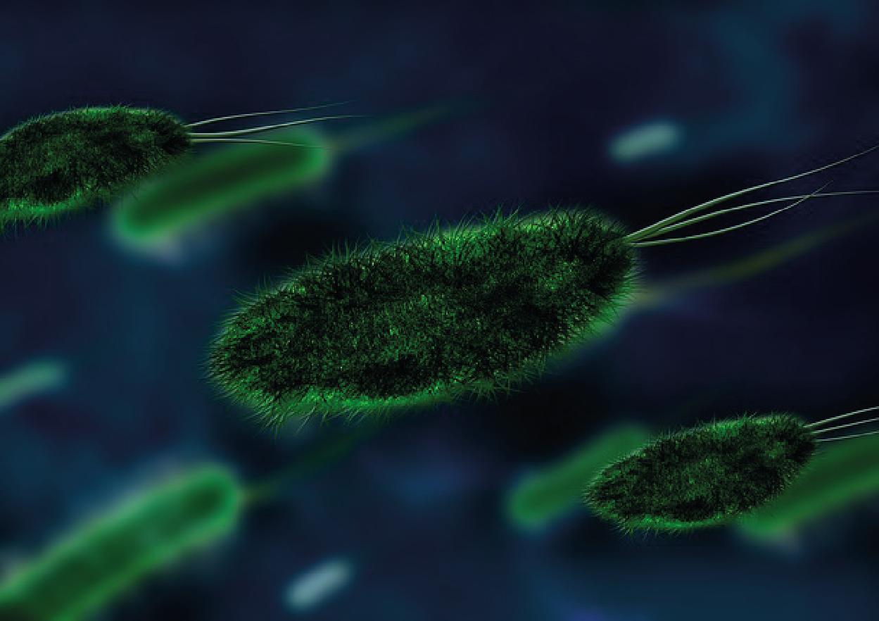 Die Zelle: Einzeller