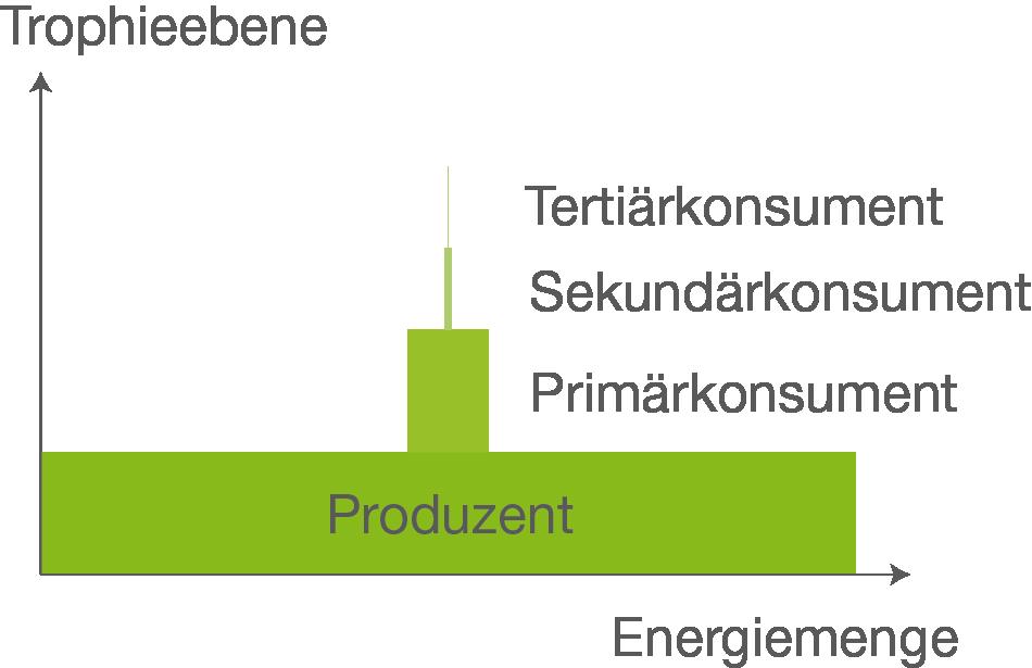 Funky Trophieebenen Und ökologische Pyramiden Arbeitsblatt Gift ...