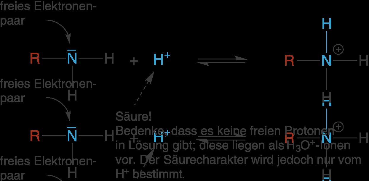 Organische Chemie: Stickstoff-und Schwefelverbindungen