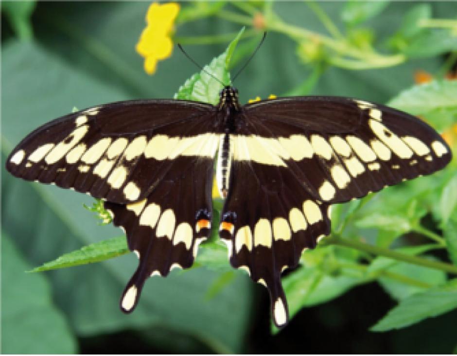 Naturstoffe: Stereoisomerie und optische Aktivität