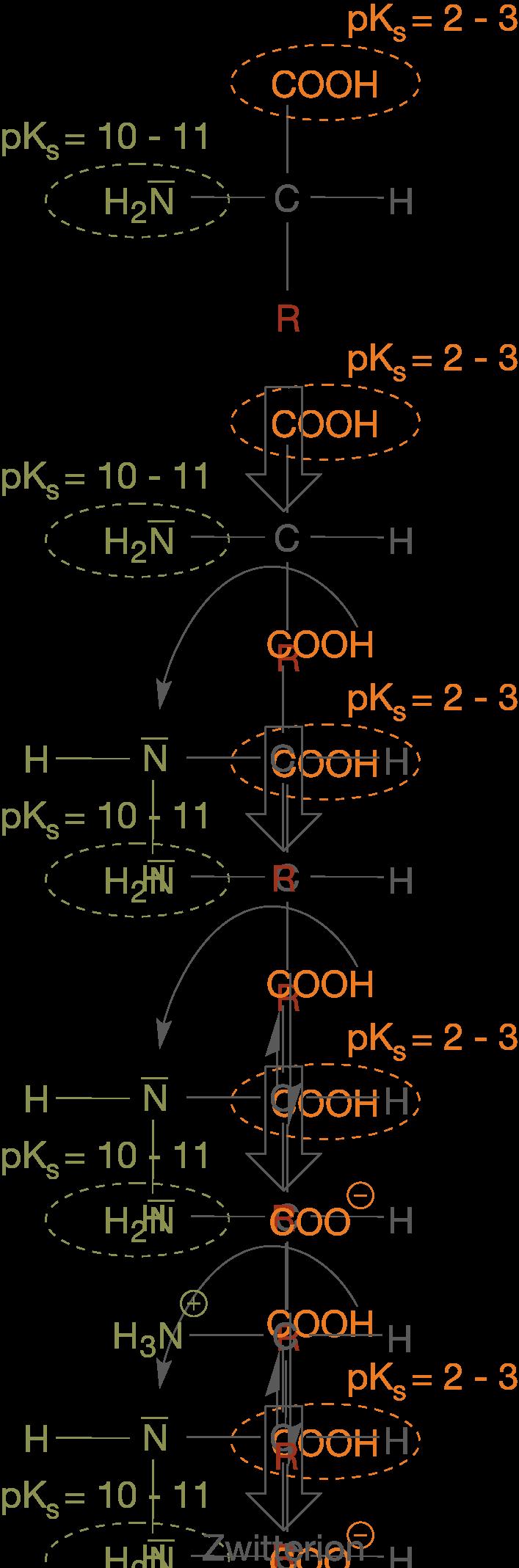 Naturstoffe: Aminosäuren